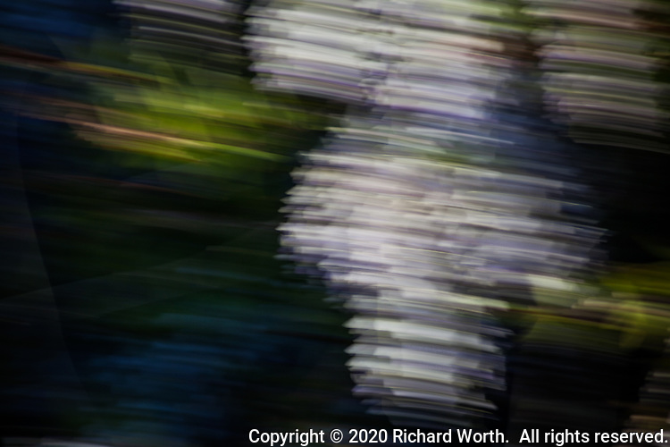 A slow shutter and a little camera motion creates an abstract image from a purple flowering vine.