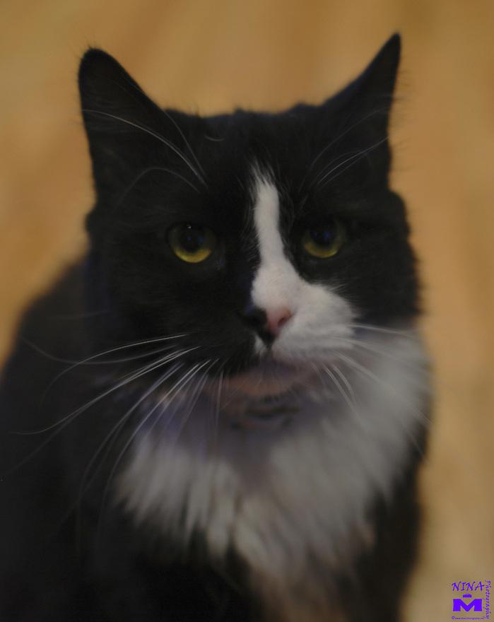 Sascha Pet Portrait