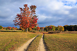 A dirt track through a meadow in autumn near Elk Rapids and Grand Traverse Bay along highway 31, Michigan, lower peninsula, USA