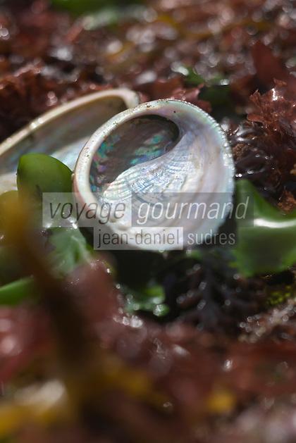 Europe/France/Bretagne/29/Finistère:/Plouguernau: Coquilles d' Ormeaux-Sylvain Huchette de France Haliotis éléve ses ormeaux en pleine mer