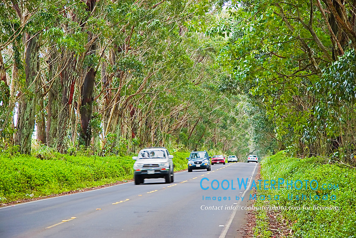 Tree Tunnel, Maluhia Road, Koloa, Kauai, Hawaii