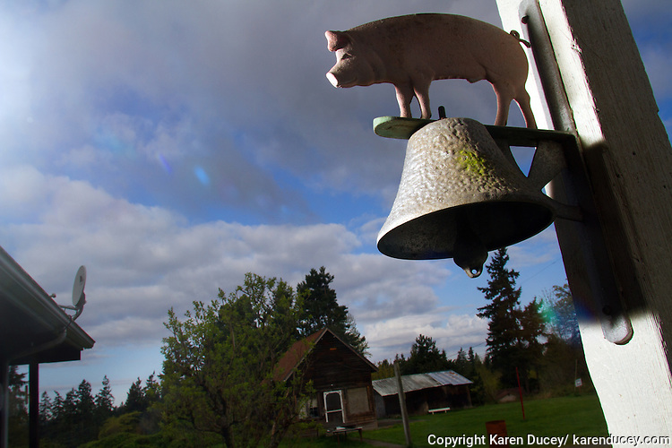 A bell with a metal pig on it outside the door of a farmer in Edgewood, Washington on April 4, 2015.