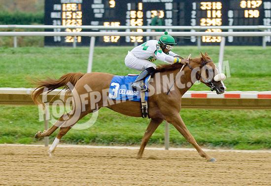 Smoke House winning The Delaware Park Arabian Juvenile Championship at Delaware Park on 10/27/12...