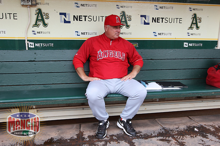 OAKLAND, CA - SEPTEMBER 5:  Manager Mike Scioscia #14 of the Los Angeles Angels gets ready in the dugout before the game against the Oakland Athletics at O.co Coliseum on Wednesday, September 5, 2012 in Oakland, California. Photo by Brad Mangin