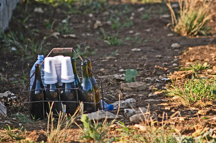 carrying basket with wine bottles and plastic glasses for harvest workers in the vineyard meursault cote de beaune burgundy france