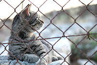 Stock image of Cat behind iron wire fence looking over keenly.