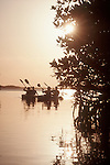 Belize, sea kayaking, mangroves, Placentia, Central America, Caribbean Sea,.