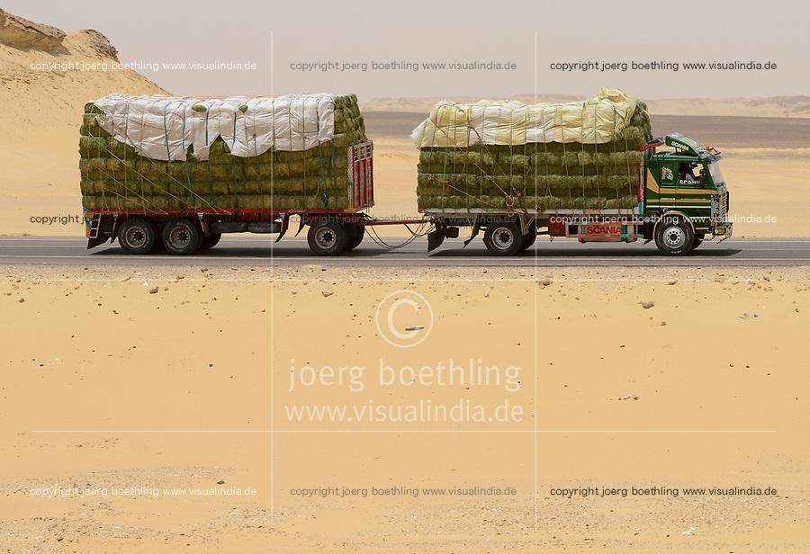 EGYPT, Farafra, truck transport hay for animal feed from large desert farms for export to Saudi Arabia / AEGYPTEN, Farafra, LKW transportiert Heu aus grossen Wuestenfarmen als Tierfutter fuer Export nach Saudi Arabien