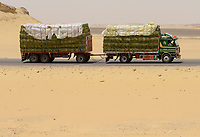 EGYPT, Farafra, truck transport hay for animal feed from large desert farms for export to Saudi Arabia / AEGYPTEN, Farafra, LKW transportiert Heu aus grossen Wuestenfarmen als Tierfutter fuer Export nach Saudi Arabien
