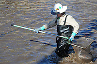 Scottsdale, Arizona (January 12, 2013) - As part of a seven-year plan to dry up all portions of its 131-mile canal system, Salt River Project (SRP), relocated the White Amur fish they used as an environmentally friendly and cost effective alternative to herbicides and heavy machinery for vegetation control. In this image, a worker inside the canal gathers fish for transport to another section of the canal. Photo by Eduardo Barraza © 2013