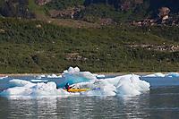 Tourists kayak amongst icebergs in Nellie Juan Lagoon, Prince William Sound, Chugach National Forest, Kenai Peninsula, southcentral, Alaska.