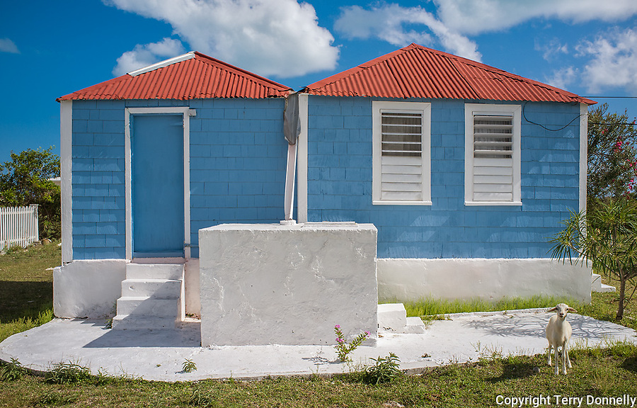 Anegada, British Virgin Islands, Caribbean<br /> Blue house with red roof and goat in The Settlement