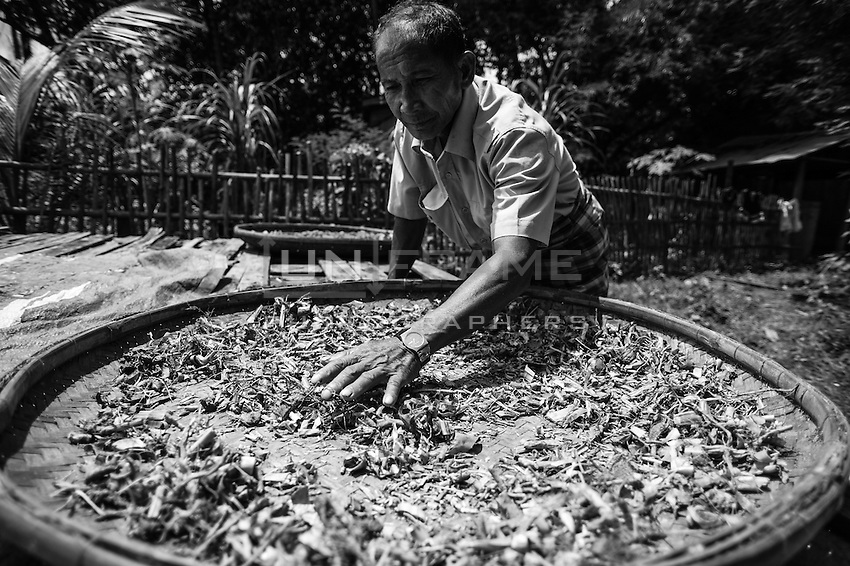 Respected and famous herbal shaman doctor. Roots and leafs of medical plants - traditional elements of Cambodian herbal medicine borrowed from ancient China. North Cambodia.