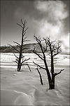 Yellowstone National Park, Woming:<br /> Mammoth Hot Springs, Upper Terraces in winter
