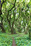 The jungle canopy at Honolua Bay on the island of Maui, Lahaina, HI, USA