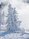 Frost forms on trees in Yellowstone.
