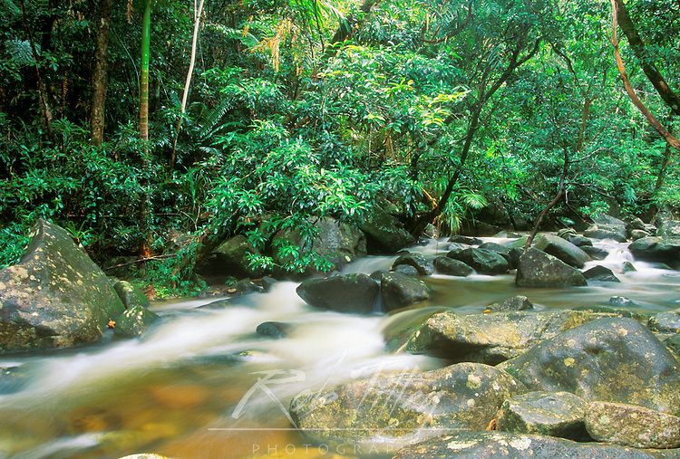 Rainforest, Daintree NP, Queensland, Australia