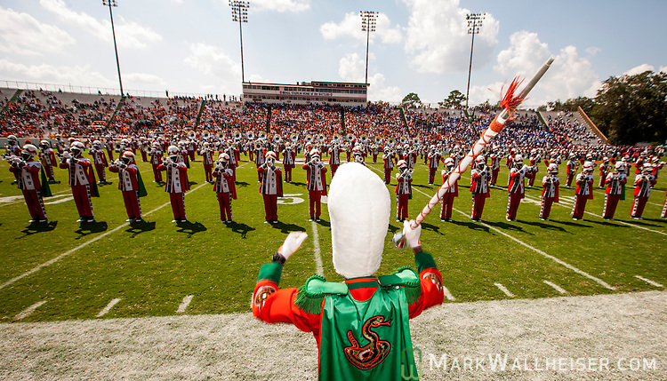 TALLAHASSEE, FL - SEPTEMBER 7, 2013:   <br /> Field commander Anwaar Bonner (center,) a junior from Atlanta, strikes up the FAMU Marching 100 band after a two year suspension.  The temperature was 110 degrees on the filed.