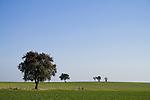 Europa, DEU, Deutschland, Rheinland Pfalz, Naturpark Saar-Hunsrueck, Typische Landschaft, Obstbaeume, Touristen, Urlauber, Wandern, Kategorien und Themen, Natur, Umwelt, Landschaft, Jahreszeiten, Stimmungen, Landschaftsfotografie, Landschaften, Landschaftsphoto, Landschaftsphotographie, Naturschutz, Naturschutzgebiete, Landschaftsschutz, Biotop, Biotope, Landschaftsschutzgebiete, Landschaftsschutzgebiet, Oekologie, Oekologisch, Typisch, Landschaftstypisch, Landschaftspflege....[Fuer die Nutzung gelten die jeweils gueltigen Allgemeinen Liefer-und Geschaeftsbedingungen. Nutzung nur gegen Verwendungsmeldung und Nachweis. Download der AGB unter http://www.image-box.com oder werden auf Anfrage zugesendet. Freigabe ist vorher erforderlich. Jede Nutzung des Fotos ist honorarpflichtig gemaess derzeit gueltiger MFM Liste - Kontakt, Uwe Schmid-Fotografie, Duisburg, Tel. (+49).2065.677997, ..archiv@image-box.com, www.image-box.com]
