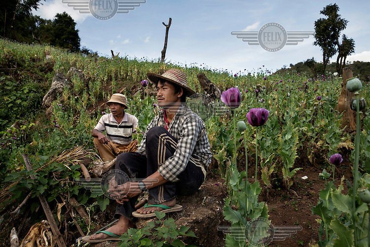 Farm workers take a break from harvesting opium in a poppy field in Bang Laem Village in a Shan State Army - South controlled area of Shan State.