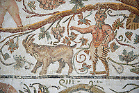 Detail of a Roman mosaics design depicting Silenus and Cupids showing Pan and a goat, from the House of Sienus, ancient Roman city of Thysdrus. 3rd century AD. El Djem Archaeological Museum, El Djem, Tunisia.