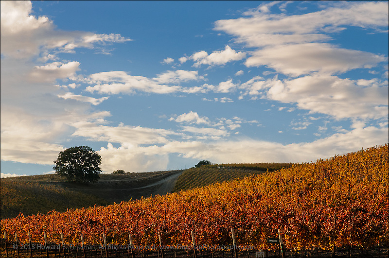 Late Light, Niner Wine Estate, Paso Robles CA