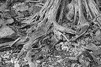Old tree in rocks