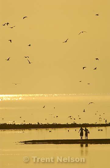 kids walking into great salt lake on antelope island, birds, sunset. Davis County project. 04/06/2005<br />