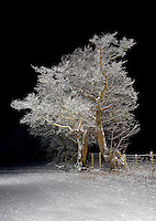 Tree covered in snow taken at night, Whitewell, Lancashire.