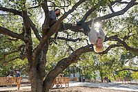 Tyler Dewey '15 and Paulina Moreno '14 climb an oak tree in the Academic Quad, Nov. 19, 2012. (Photo by Marc Campos, Occidental College Photographer)