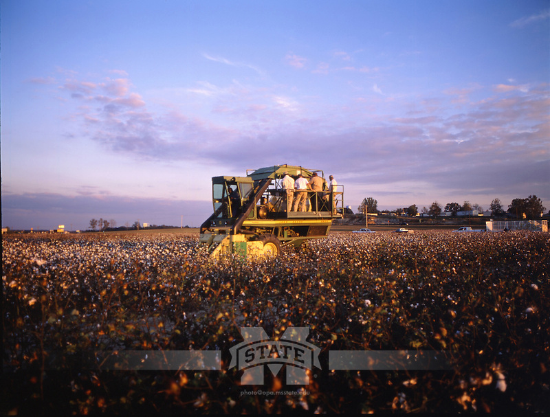 Cotton Picker at North Farm (photo by Fred Faulk / © Mississippi State University)