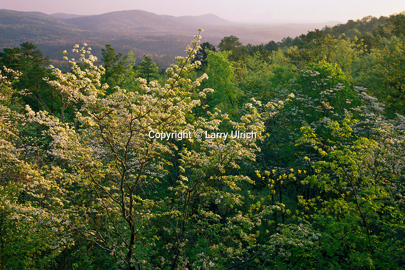 Flowering dogwood<br />