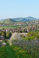 Germany, Baden-Wuerttemberg, Markgraefler Land, wine village Staufen: above castle ruin Staufen nested on a hill | Deutschland, Baden-Wuerttemberg, Markgraeflerland, Weinort Staufen: auf einem Huegel die Burgruine Staufen