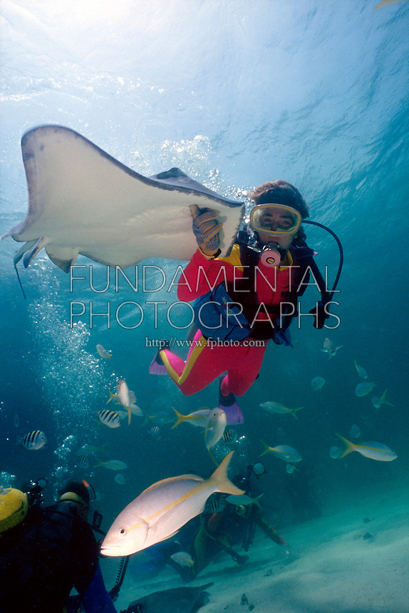 MARINE LIFE: DIVERS<br /> Naturalist Diver Studying Southern Stingray<br /> Dasyatis americana .