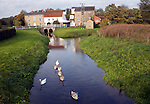 Swans on River Deben and Rackhams water mill, Wickham Market, Suffolk, England