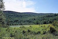BS04-009a  Bog, Acadia National Park, Maine