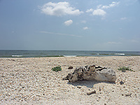 SEA_LOCATION_80371