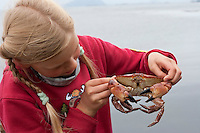 Mädchen, Kind mit einem Taschenkrebs, Taschen-Krebs an der Meeresküste, Cancer pagurus, European edible crab, Krabbe, Knieper