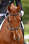 Stapleford Abbotts. United Kingdom. 05 October 2019. Class 2. Unaffiliated dressage championships. Brook Farm training centre. Essex. UK.~ 05/10/2019.  MANDATORY Credit Garry Bowden/SIPPA - NO UNAUTHORISED USE - 07837 394578