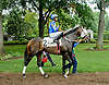 Picko's Pride before The Stonewall Farm Ocala Hockessin Stakes at Delaware Park on 7/28/12