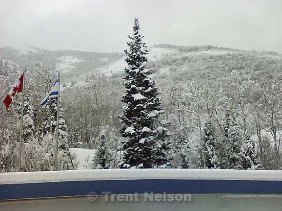 tree, snow on bobsled track