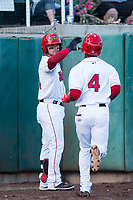 Orem Owlz first baseman Connor Fitzsimons (14) congratulates D'Shawn Knowles (4) after he hit a home run during a Pioneer League game against the Ogden Raptors at Home of the OWLZ on August 24, 2018 in Orem, Utah. The Ogden Raptors defeated the Orem Owlz by a score of 13-5. (Zachary Lucy/Four Seam Images)