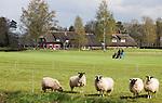 LOCHEM -  18e hole met clubhuis en schapen  Lochemse Golf Club De Graafschap. COPYRIGHT KOEN SUYK