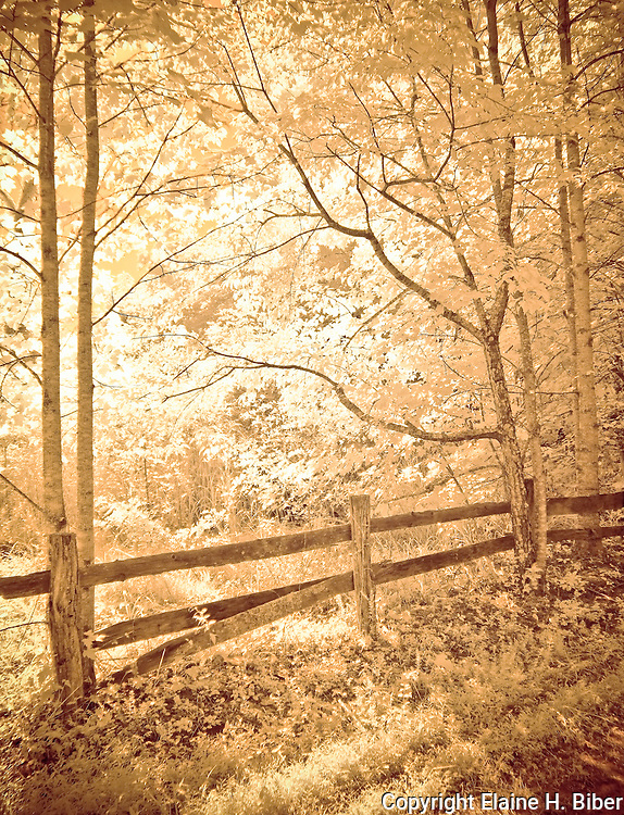 Old wood fence in hardwood forest, backlit