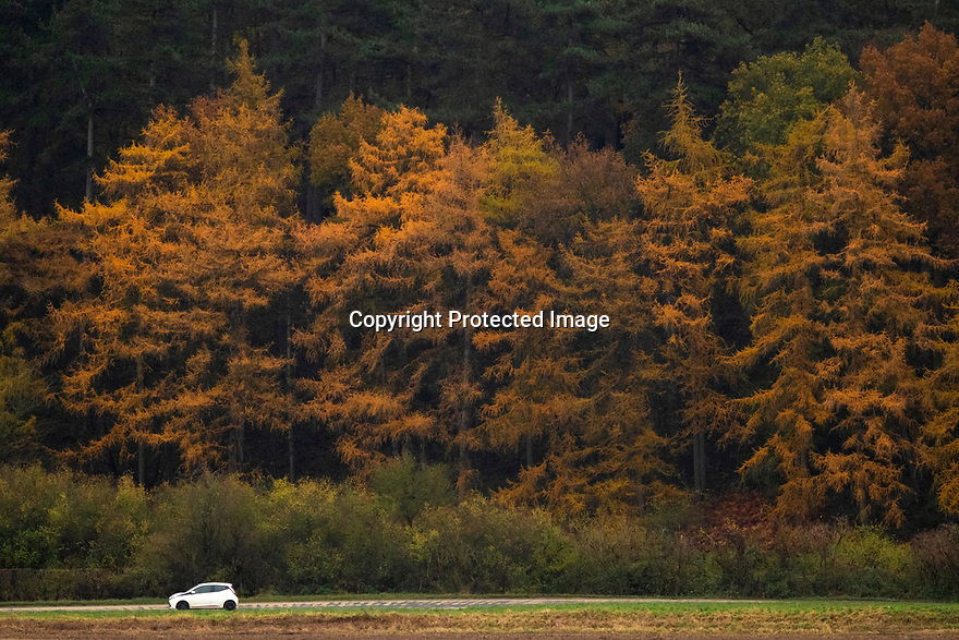 22/11/19<br /> <br /> A Toyota passes a kaleidoscope of autumnal colour near Kegworth in Leicestershire today.<br /> <br /> All Rights Reserved: F Stop Press Ltd.  <br /> +44 (0)7765 242650 www.fstoppress.com