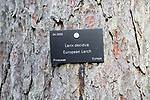 Tree species identification label, National arboretum, Westonbirt arboretum, Gloucestershire, England, UK - Larix decidua, European larch