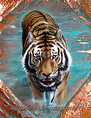 Sandi, REALISTIC ANIMALS, REALISTISCHE TIERE, ANIMALES REALISTICOS, paintings+++++coppertiger3,USSN89,#a#, EVERYDAY ,tiger,tigers, ,puzzles
