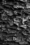 Close-up cypress tree bark