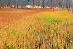 Colorful autumn grasses adorn a clearing in Yellowstone National Park, Wyoming.