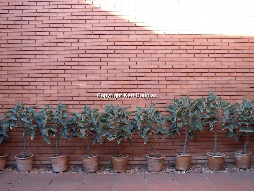 Museo del Barro, a contemporary museum, Asuncion, Paraguay. Entry way wall. Museum del Barro.